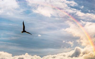 Melt Away Everyday Stress with Rainbow Mediation by Dr Melanie